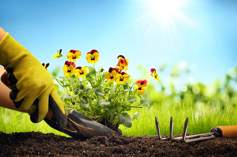 How Gardening Improves Our Health!