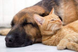 Tips for Selling Your Home When You Have Pets